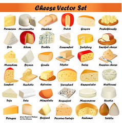 Set of different types of cheese on a white vector