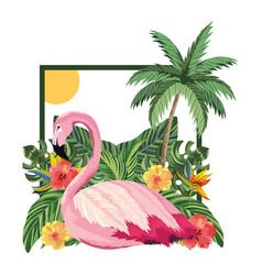 tropical flamingo cartoon vector image