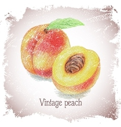 Vintage card with peach vector image