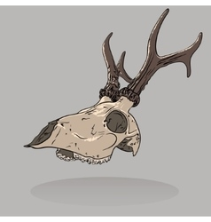 an isolated deer skull vector image