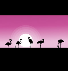 collection stock of flamingo at sunset scene vector image