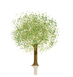 tree with green leaves vector image vector image