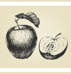 hand drawn apple whole and half vector image