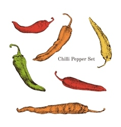 Chilli peppers color sketches set vector image