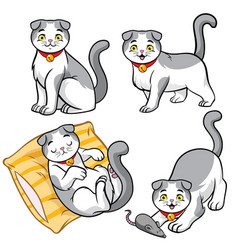 Cute scottish fold cat vector