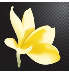 Frangipani realistic vector image