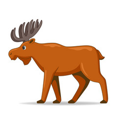Moose animal standing on a white background vector