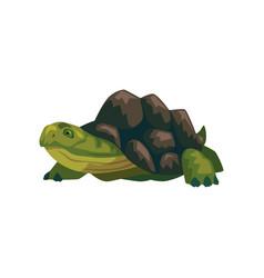 Sea turtle water reptile cartoon vector
