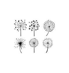 set of 6 dandelions in linear style flower vector image
