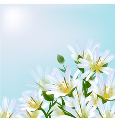 Floral background Daisies vector image