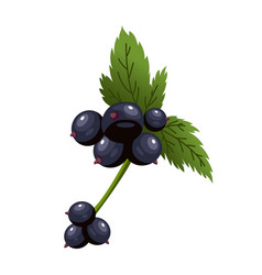 hand drawn branch black currant berries with vector image
