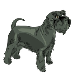 miniature schnauzer dog vector image