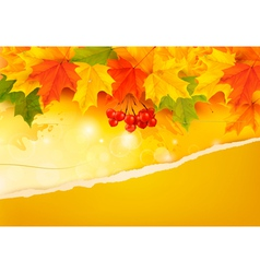 Autumn background with colorful leaves and ripped vector image vector image