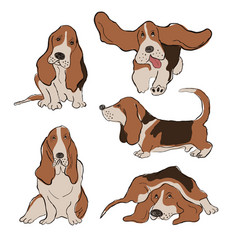 Collection basset hound dog icons vector
