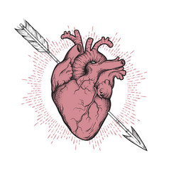 human heart pierced with cherubs arrow hand drawn vector image