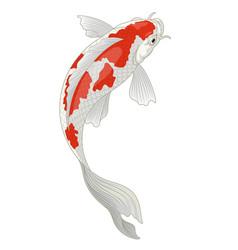 Koi fish japan in red and white kohaku pattern vector