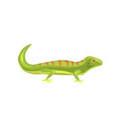 Lizard amphibian animal cartoon vector