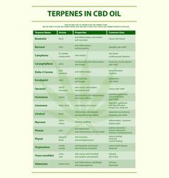 Terpenes in cbd oil vertical infographic vector