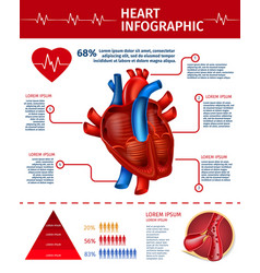 Vertical banner with heart infographic statistic vector