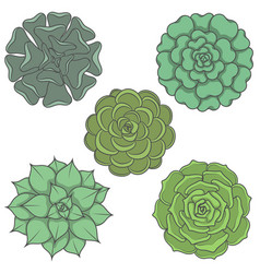 set of images with ornamental plants vector image