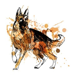 Colored hand drawing of a German Shepherd vector image