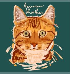 American shorthair painting poster vector