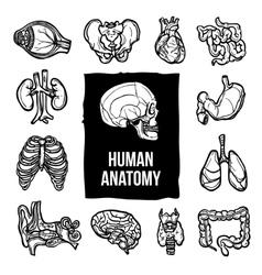 Anatomy Icons Set vector image