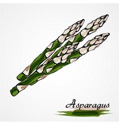 Asparagus vector