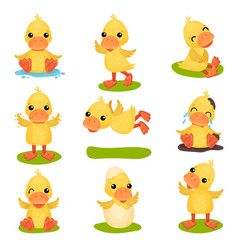 Cute little yellow duckling character set chick vector