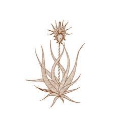 decorative brown line flower in zentangle style vector image