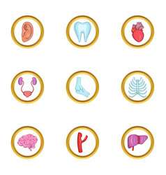 intern organs icon set cartoon style vector image