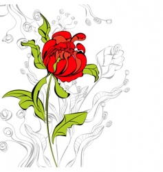 red peony flower vector image