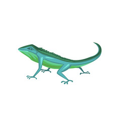 salamander amphibian animal cartoon vector image