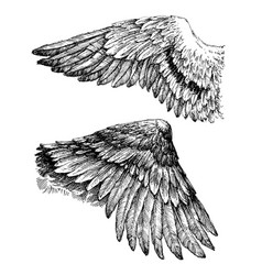 wings drawing vector image vector image