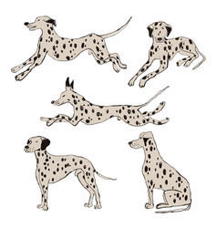 collection dalmatian dog icons vector image