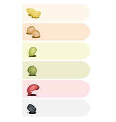 Different beans banner vector