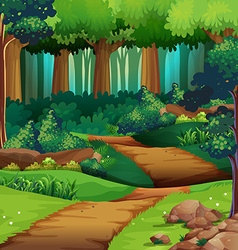 Forest scene with dirt trail vector image