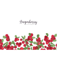 Horizontal backdrop decorated with lingonberries vector