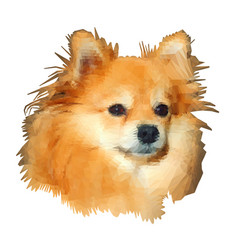 low-poly modeling pomeranian spitz-dog vector image