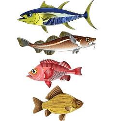 beautiful fish vector image vector image