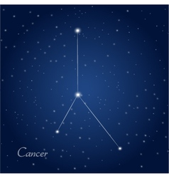 Cancer constellation zodiac vector