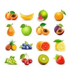 icon set of fruits isolated on white vector image
