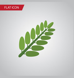 isolated acacia leaf flat icon leaves vector image