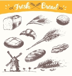 Set fresh bread drawn wheat vector image