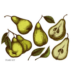 set hand drawn colored pears vector image
