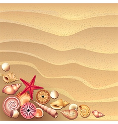 shells sand vector image vector image
