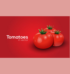Tomatoes in format vector