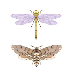 with hand drawn two insects dragonfly and dead vector image