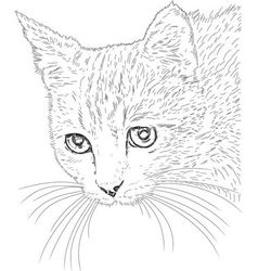Line drawing cat vector image
