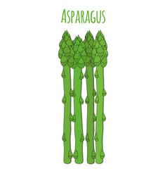 green asparagus cartoon flat style vector image